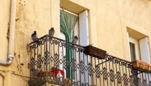 tauben auf dem balkon tauben vertreiben 5 tipps zur taubenabwehr stylejournal