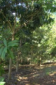 australian native plants recent projects u2013 eastern forest nursery