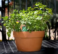 contain yourself growing vegetable gardens in pots the salt