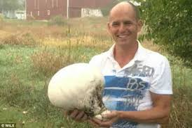 Mushrooms Growing In Backyard Giant Mushrooms Larger Than Basketballs Sprout Up In Family U0027s
