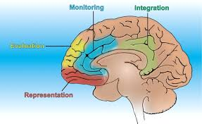 The Anatomy Of The Human Brain Articles Physiological Reviews