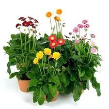 houseplants that need little light plants that need little light outdoor plants that need little light