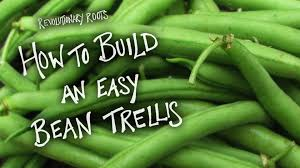 how to build an easy bean trellis farming gardening lesson