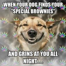 Smiling Dog Meme - 25 funny dog memes part 2 smiling dogs dog memes and funny dog