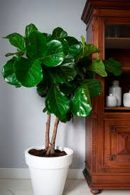 240 best flowers u0026 plants images on pinterest plants at home