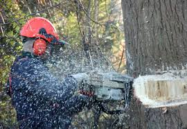 tree cutting removal equipment