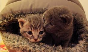 Kitten Bed Two Kittens That Were Dumped In A Rubbish Bin Have Been Rescued