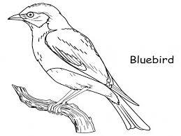 bluebird coloring animals town animals color sheet