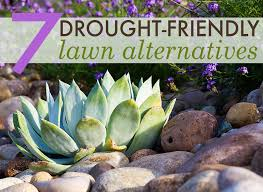 Drought Friendly Landscaping by 7 Beautiful Drought Friendly Lawn Alternatives Xeriscaping
