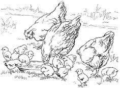 free farm animal coloring pages free farm animals coloring pages for kids coloring pages