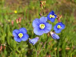 South African Wild Flowers - south african national parks sanparks official website