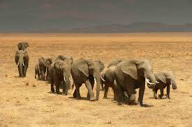 the african elephant fund