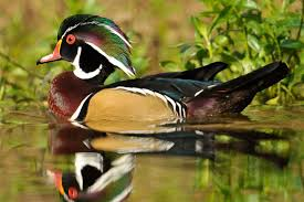 Mississippi wildlife images Affiliate of the week mississippi wildlife federation the jpg
