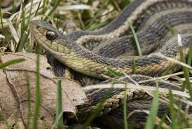 how to prevent snakes on your property terminix