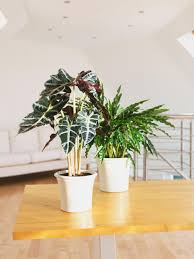 Modern Houseplants by How To Decorate With Houseplants Hgtv