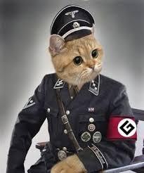 Grammer Nazi Meme - grammar nazi cat blank template imgflip