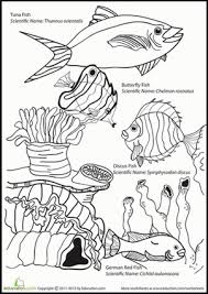 first grade science coloring worksheets free coloring first grade