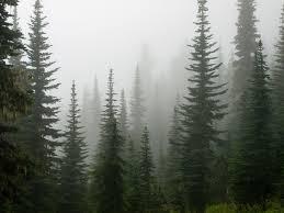alpine trees moss flickr