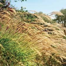 ways to split ornamental grasses wearefound home design