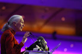 jane goodall institute australia live streamed lecture at the