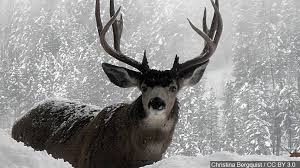 Kentucky Wildlife images Kentucky fish and wildlife commission proposes 2016 2017 deer jpg