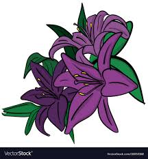 purple lillies three purple lilies with green leaves on a white vector image