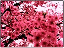 Images Flowers Pink Flowers Images 37 Wujinshike Com