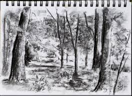 exercise study of several trees ocadrawing1log