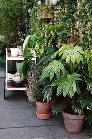 balkon accessoires barsö klimplantrek ikea ikeanl ikeanederland accessoires