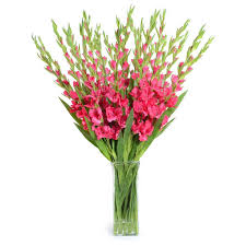 Gladiolus Flowers Tabulous Design Gladiolus August U0027s Flower Of The Month