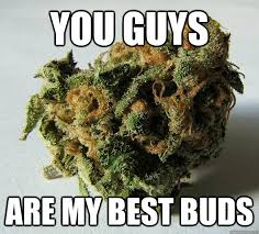 Best Weed Memes - you guys are my best buds weed bud quickmeme
