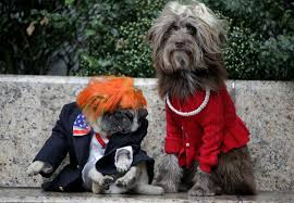Dogs Halloween Costumes Pictures U0027s Fashionable Halloween Costumes Dogs Huffpost