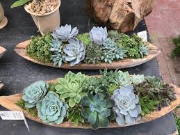 Succulent Plant Beautiful And Creative Ways To Display Succulent Plants Montana