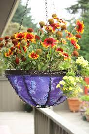 Hanging Plants For Patio 56 Best Plants Images On Pinterest Indoor Gardening Baby