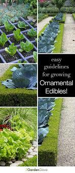 ornamental edibles gardens garden ideas and yards