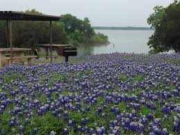 Flowers In Waco - texas bluebonnets at koehne park lake waco love those spring