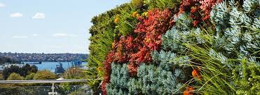 vertical gardens what are vertical gardens ambius