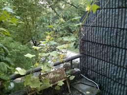 suspended cucumber trellis u2013 circuit garden