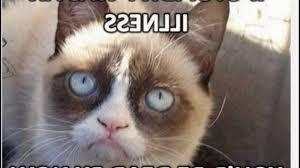Grumpy Cat Meme Clean - siamese grumpy cat memes youtube photos of pretty grumpy cat