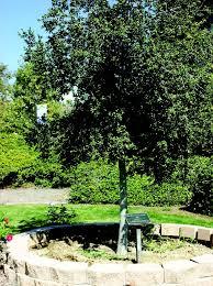 Chc Winter Garden - tree of life