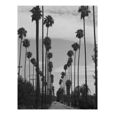 vintage black white california palm trees photo poster zazzle