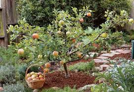 create small fruit trees with this pruning method organic