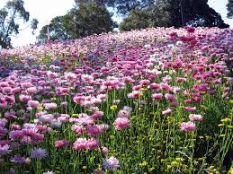 Kings Park Botanic Garden by Kings Park And Botanic Garden Wa Weddings