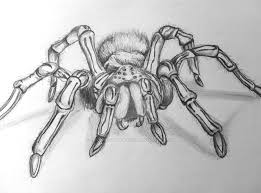 spider drawing by just another rocker on deviantart
