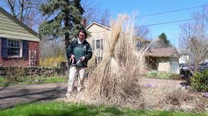 petitti trimming ornamental grasses