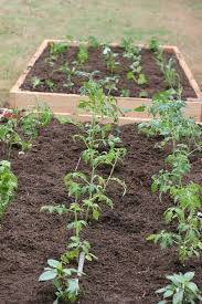 Raised Bed Gardening Irrigation System For Raised Bed Garden Pretty Prudent