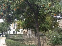boutique hotel in the historic center of sevilla spain u2013 empty