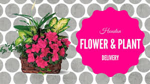 houston flower delivery houston flower delivery green plants delivered