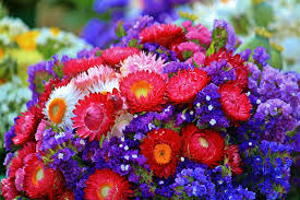 flowers images dried flower images pixabay free pictures
