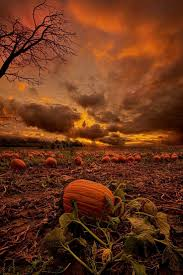 Great Pumpkin Blaze Membership by 233 Best Autumn Fall Halloween And Thanksgiving Images On